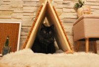 Upcycling: Katzen-Kratzmatte und Katzentipi mit Kokosmatten