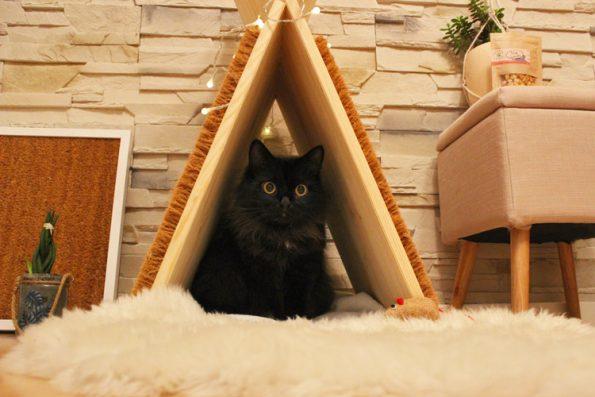 Katzentipi aus Holz und Kratzmatte