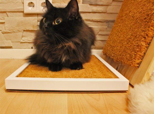 Kratzmatte für Katzen mit Katze