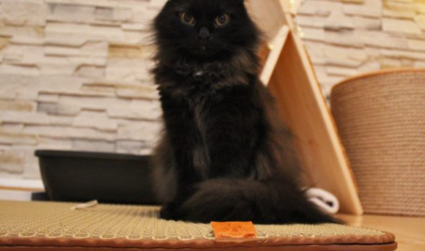 Katzenklovorleger mit Katze Zorro