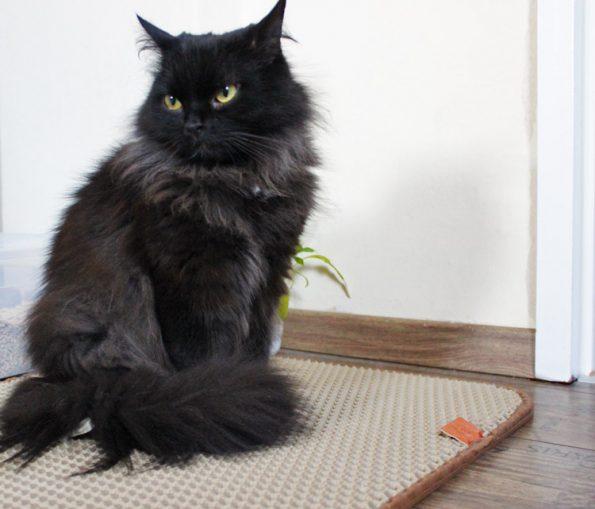 Katzenklo-Matte mit Zorro