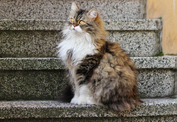 Blogkatze Socke auf Treppe