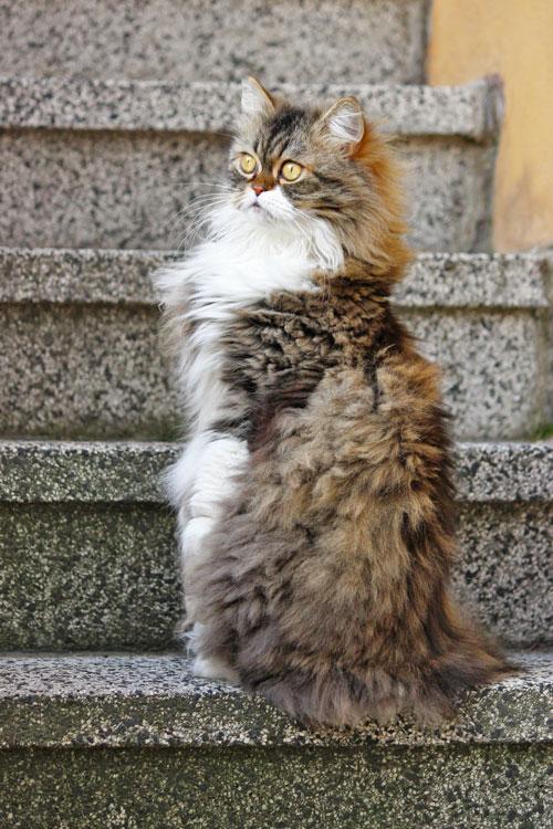 Katze oder Erdmännchen
