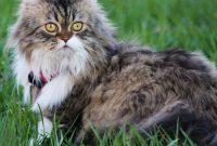 Gesicherter Freigang für Katzen - ist jede Katze dafür geeignet? Unsere Story
