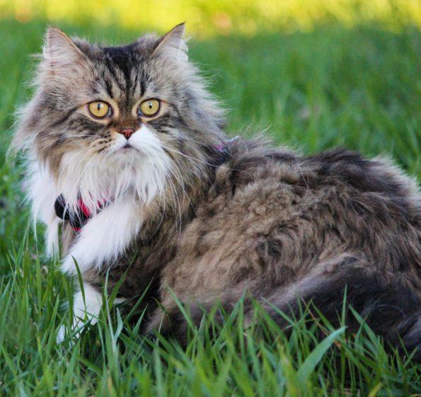 Gesicherter Freigang mit Katze an der Leine