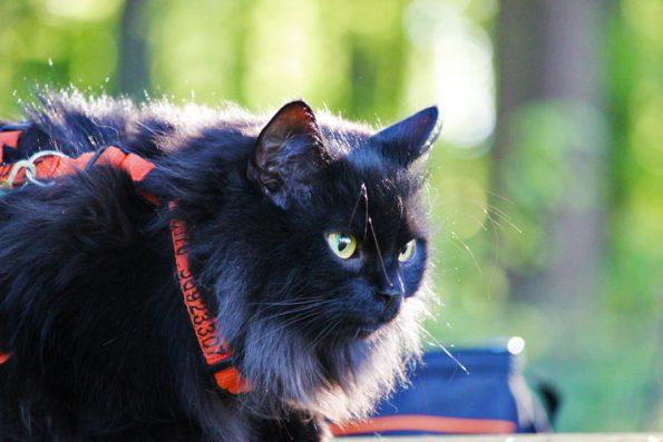 Gesicherter Freigang mit Katze draußen
