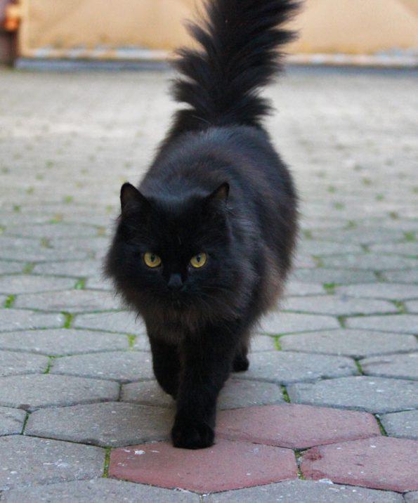 Katze im gesicherten Garten