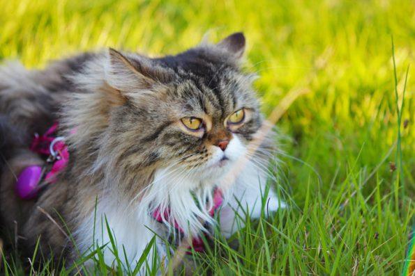 Gesicherter Freigang für die Katz