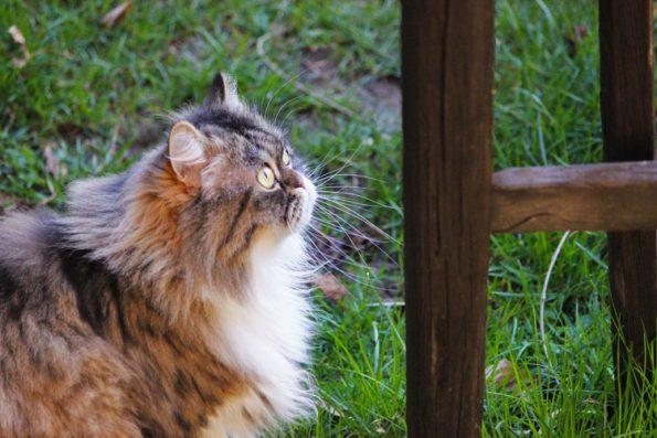 Katze will hoch hinaus