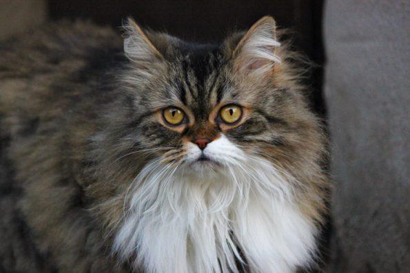 Katze im Portrait - socke