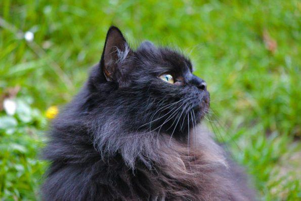 Katze auf Wiese im gesicherten Garten