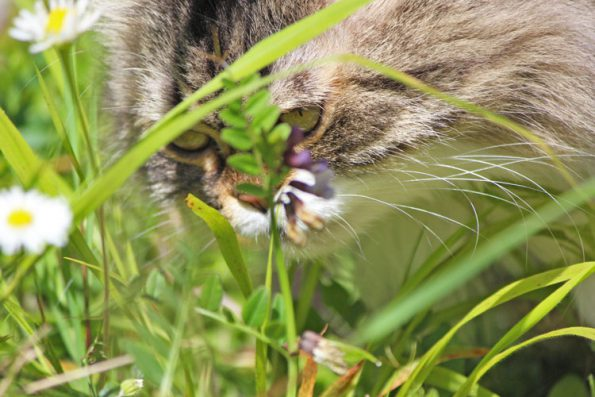 Katze und ungiftige Pflanze