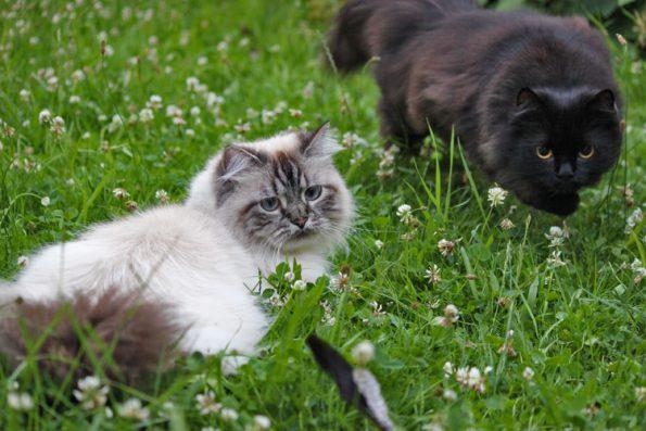 Mehrere Katzen an Leine