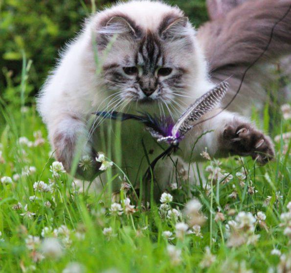 Katze jagt draußen