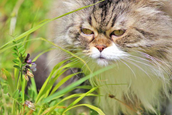 Katze draußen im Gras