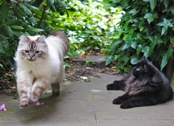 Mehrere Katzen draußen an Leine