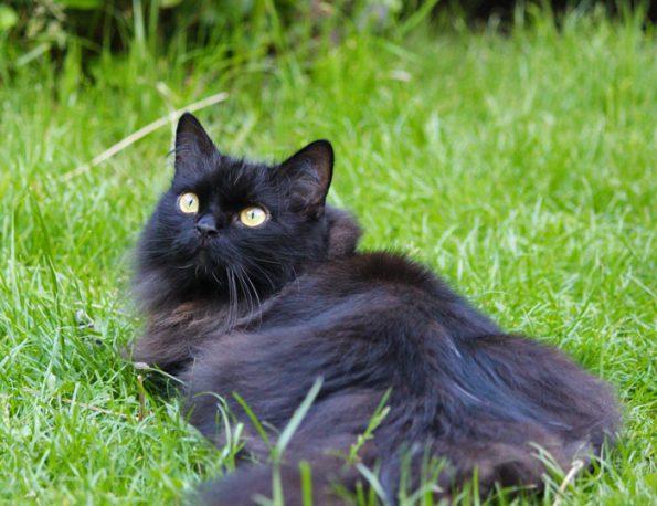 Katze draußen im Portrait