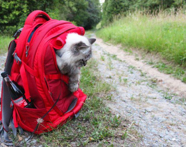 Kurgo G Train K9 Rucksack für Katzen