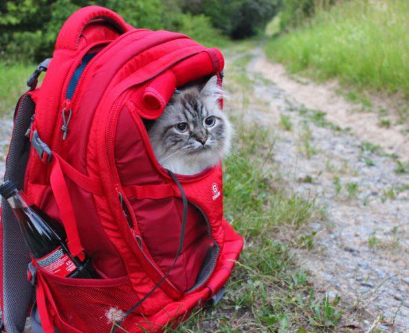 Rucksack für Katzen
