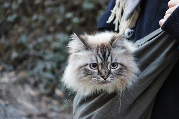 Katzentragetasche