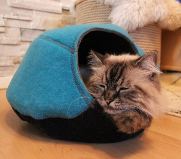 KatzenhöhleUnivok_schlafende Katze