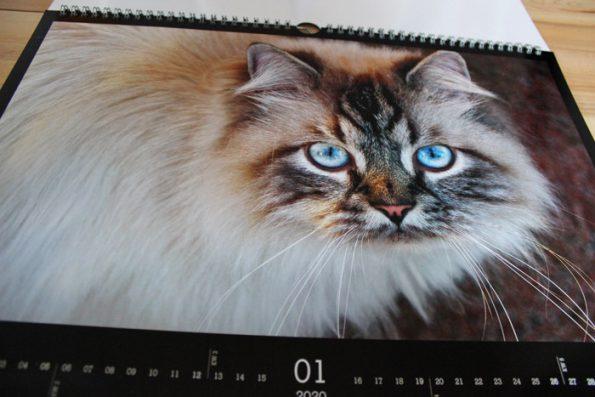 Katzenkalender von Cewe mit Katzenfotos