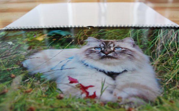 Katzenkalender von Cewe