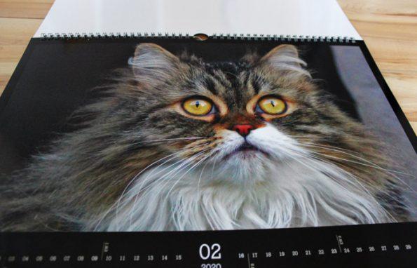 Katzenkalender CEWE mit Katzenfotos