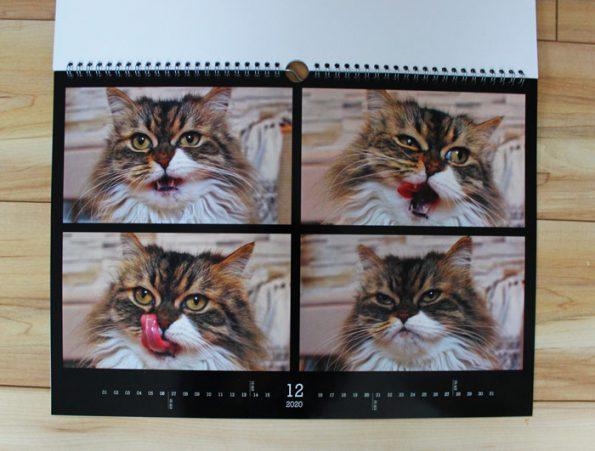 Katzenfotos in Katzenkalender drucken