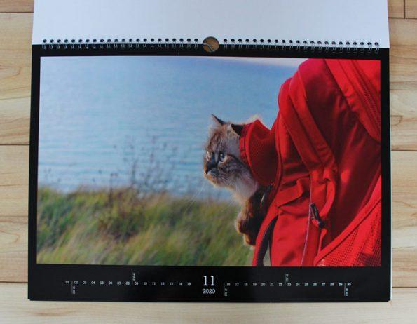 Katzenkalender Motiv