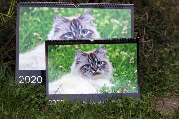 Katzenfotos in Katzenkalender
