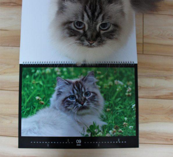 KatzenkalenderCEWE