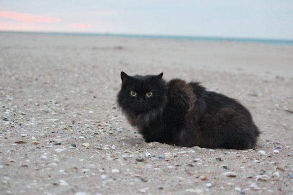 Katze am Strand
