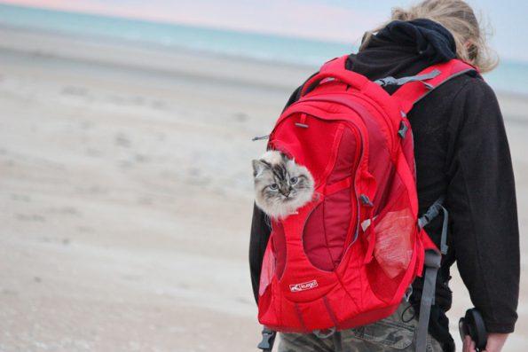 Mit Katze verreisen- Katze im Rucksack