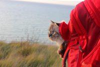 Mit Katze verreisen – Bienvenue en France