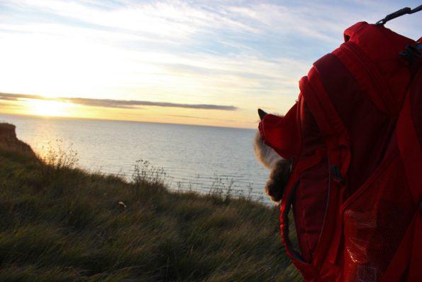 Mit Katze verreisen Sonnenuntergang