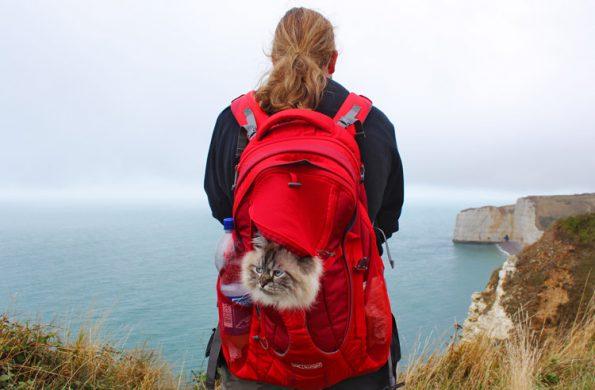 Mit Katze verreisen Klippenwanderung