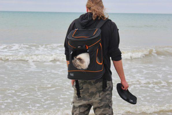 Mit Katze verreisen am Meer