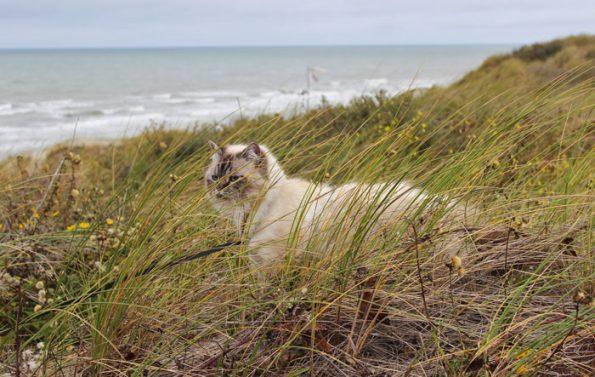 Katze in Dünen
