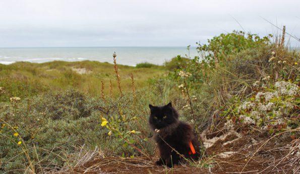 Mit Katze verreisen - Katze in Dünen