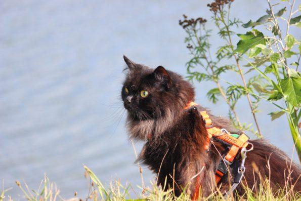 Mit Katze verreisen- wie viele Katzen