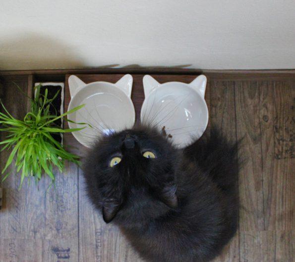 Futterbar für Katzen von oben