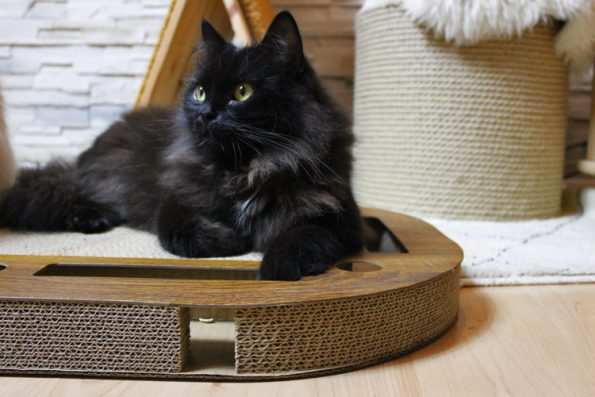 Kratzbrett PlayPlate CanadianCat Catmodel