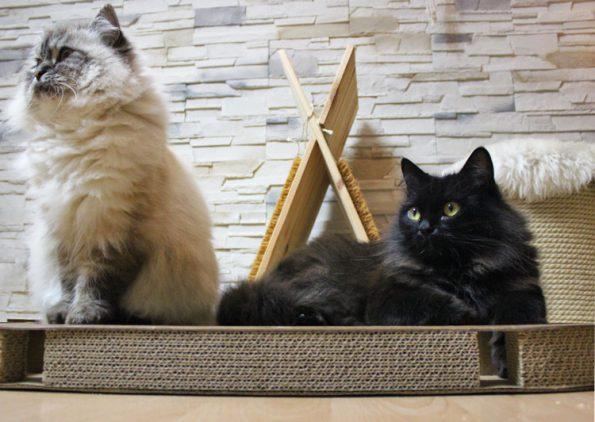 Kratzpappe für Katzen von CanadianCat