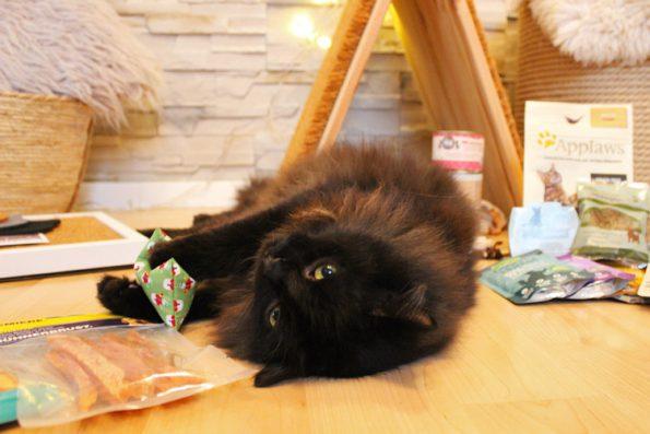 Fensterkatzen Tauschpaket Baldriankissen