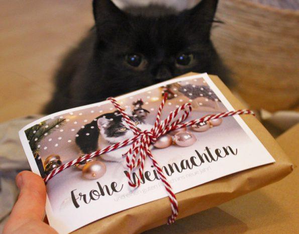 Fensterkatzen_Tauschpaket_Blogkatzen_Geschenk
