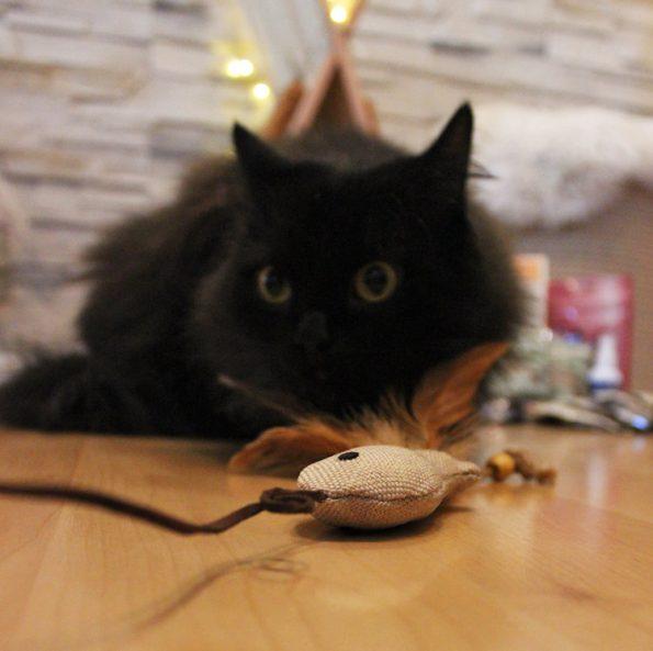 Fensterkatzen_Tauschpaket_Blogkatzen_Katzenangel