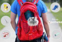 Medikamente für Katzen? Notfallapotheke auf Reisen & Daheim