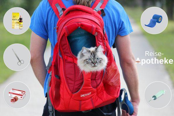Medikamente für Katzen - Katzenapotheke Reise Daheim