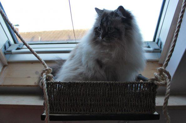 Fensterliege für Katzen DIY